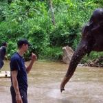 chaing_mai_elephant1